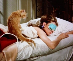 Holly Golightly cat