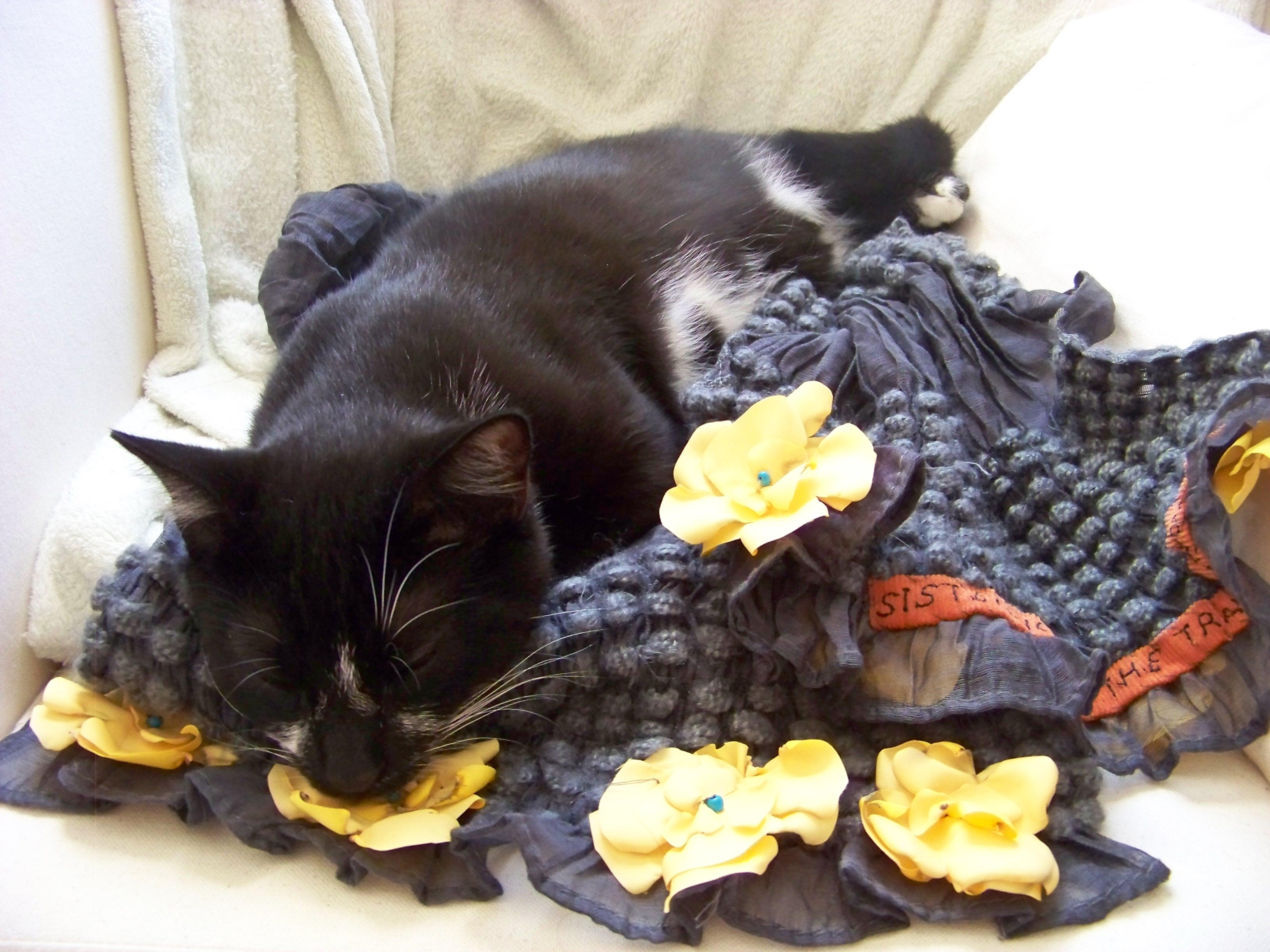 cat sleeping in scarf
