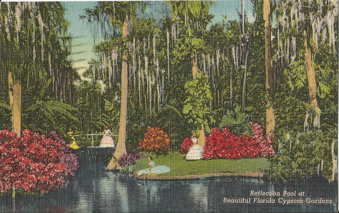 vintage postcard Reflection Pool Cypress Gardens Florida