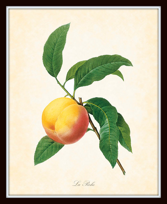 vintage scientific peach print