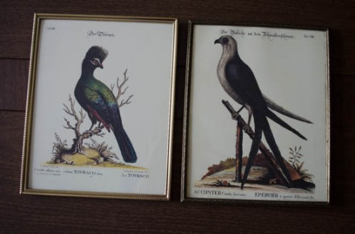 diy illustrated bird plates