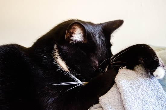 hermes the cat sleeping