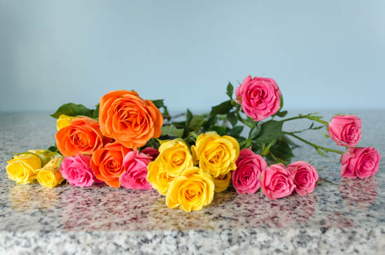 Bright Spray Roses