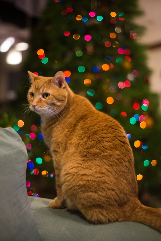 Nikki the Cat with Christmas Tree