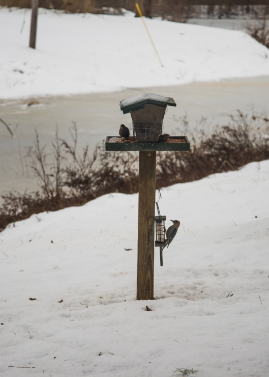 Bird Feeder in Wintertime Snow