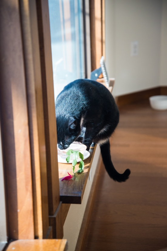 Cat Drinking Plant Water