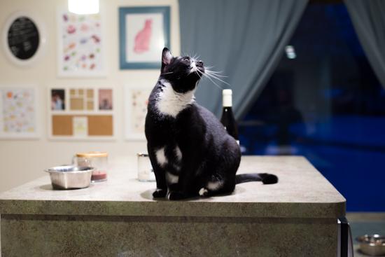 Hermes the Cat