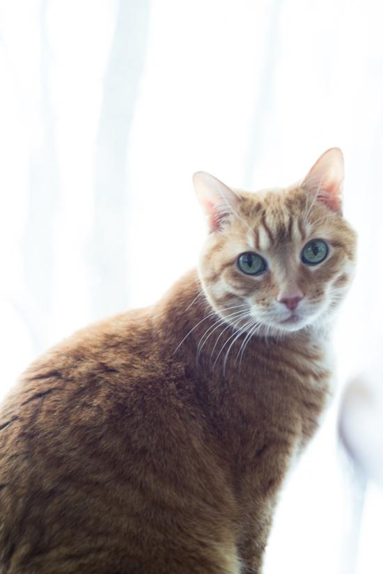 Orange Cat with Green Eyes