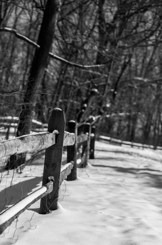 Black and White Snow Photo